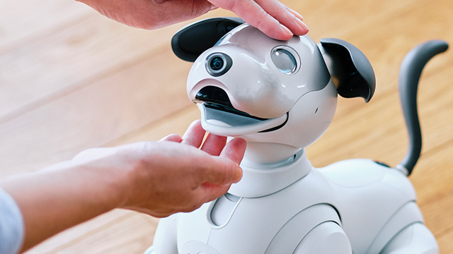 Life with aibo 5