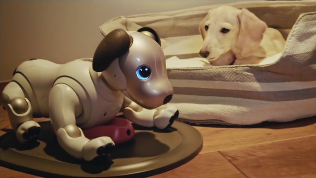 Life with aibo 6